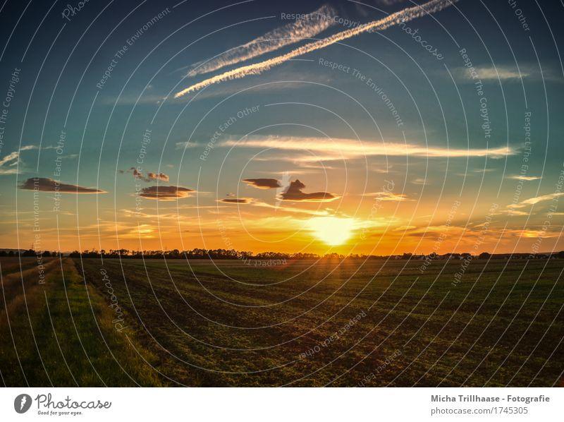 Sonnenuntergang auf freiem Feld Himmel Natur Ferien & Urlaub & Reisen blau Farbe schön Landschaft Erholung Wolken Umwelt Wärme gelb natürlich Gras Stimmung