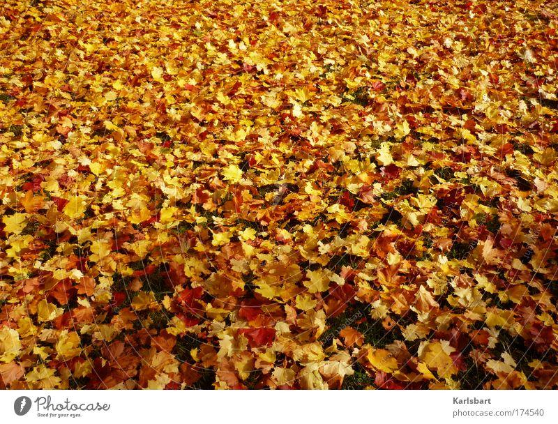 [f]liegender. teppich. Natur schön Baum rot Blatt gelb Herbst Wiese Design Umwelt gold verrückt frisch Vergänglichkeit Kindergarten