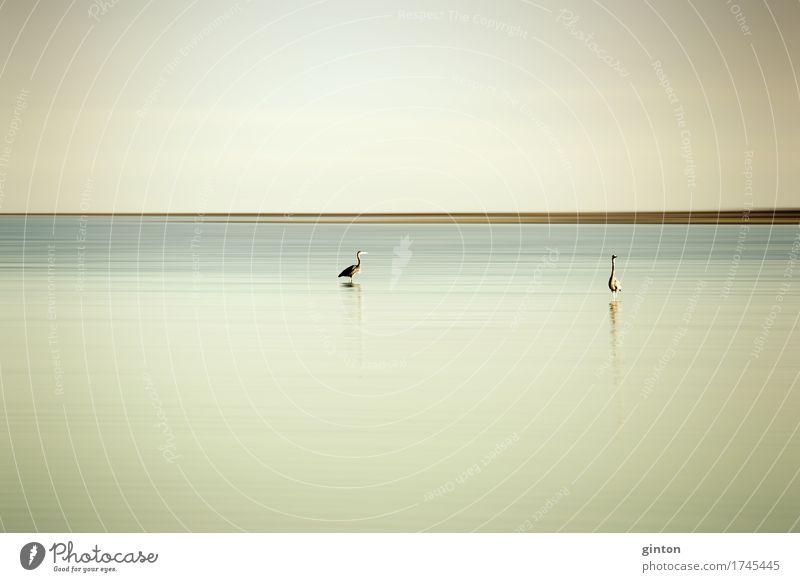 Fischreiher am Saltonsee Natur Landschaft Tier Wasser See Wildtier Vogel 2 beobachten Jagd Cologne Fine Art Natur Fine Art Graureiher Reiher Porträt Kalifornien