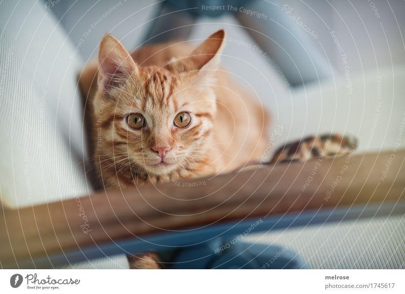 V O R S I C H T geboten ... Katze blau weiß Tier Tierjunges klein braun liegen warten beobachten niedlich weich Neugier entdecken nah Gelassenheit