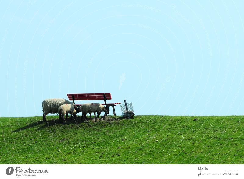 Reise nach Jerusalem grün blau Sommer Ferien & Urlaub & Reisen ruhig Tier Erholung Wiese Gras Frühling Landschaft Zufriedenheit Zusammensein Küste Bank stehen