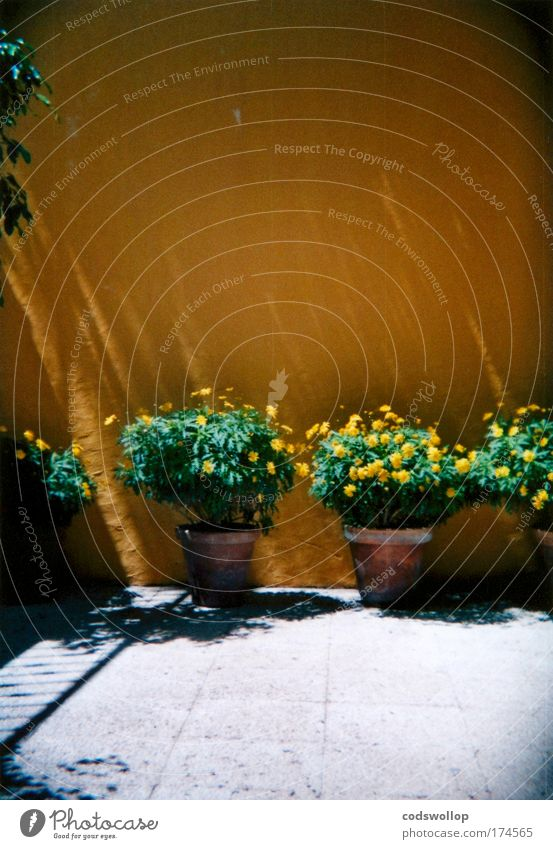 potted plants Blume Pflanze Sommer gelb Erholung Wand Garten Mauer Wärme ästhetisch Häusliches Leben Terrasse Gartenarbeit Arbeit & Erwerbstätigkeit Topfpflanze