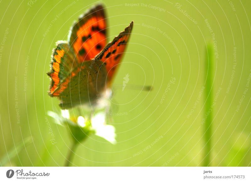 sonnenzeit Natur schön Pflanze ruhig Tier Wiese Freiheit Umwelt frei natürlich Gelassenheit Schmetterling Wildtier