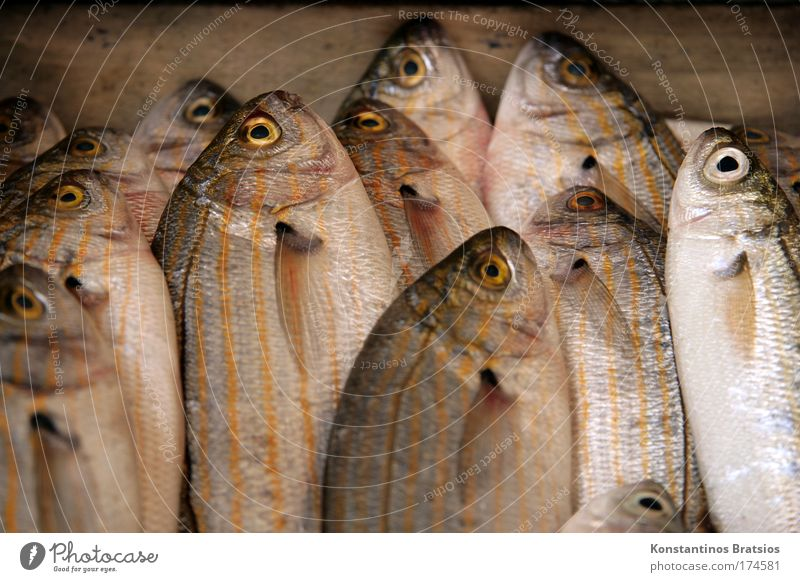 SEAFOOD - GOLDSTRIEME Meer Auge Ernährung Lebensmittel frisch Fisch Tiergruppe Appetit & Hunger genießen lecker Angeln Bioprodukte Qualität Fischer Mittelmeer Flosse