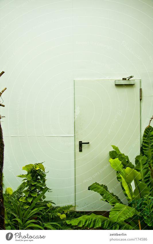Dschungel (Ausgang) grün Pflanze Garten Raum Tür Eingang Palme Griff Sauerstoff Naturschutzgebiet