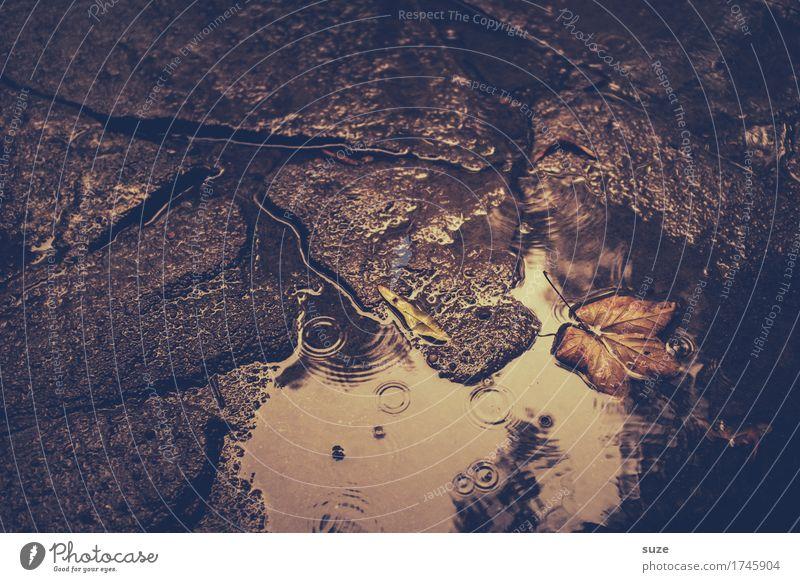 Im August Natur Wasser Herbst Wetter Blatt Traurigkeit alt ästhetisch dunkel nass natürlich braun ruhig Trauer Vergänglichkeit Zeit Herbstlaub herbstlich