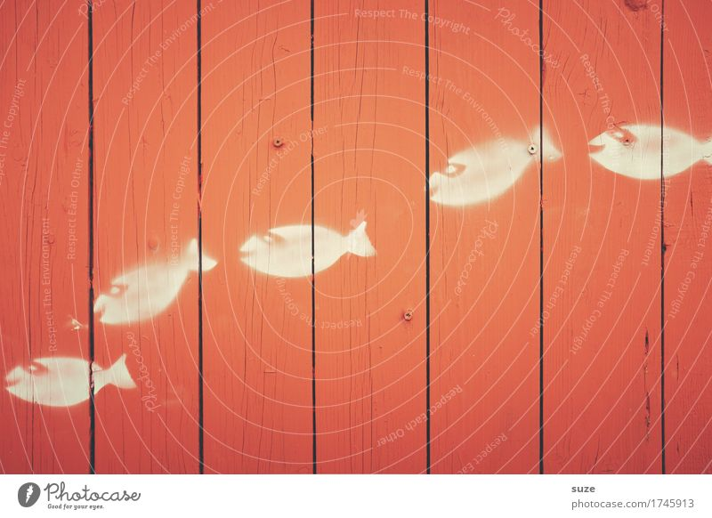 Das sind nur kleine Fische ... weiß rot Wand Graffiti lustig Hintergrundbild Religion & Glaube Holz Schwimmen & Baden Linie einfach Symbole & Metaphern