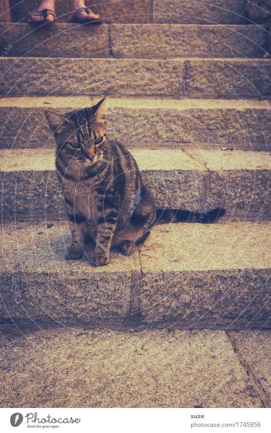 Nächstenliebe | oberste Stufe Tourismus Fuß Treppe Haustier Katze 1 Tier Stein authentisch natürlich niedlich retro wild Tierliebe Misstrauen ignorant Erwartung