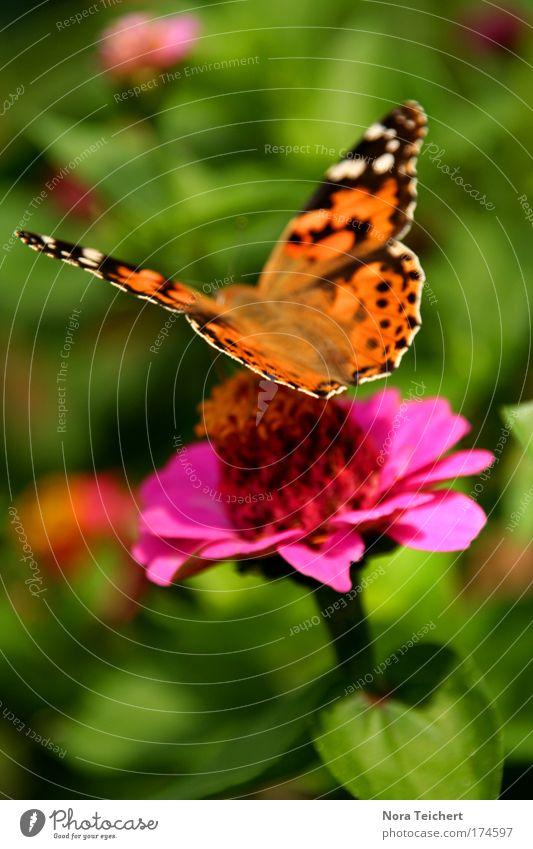Summer Scene schön Blume grün Pflanze Sommer Ernährung Tier Blüte Freiheit Stimmung rosa elegant Umwelt frei ästhetisch Flügel