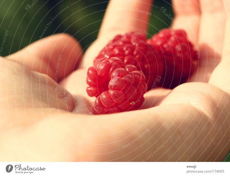Früchtchen I Natur Hand rot Sommer Ernährung Frucht süß lecker Himbeeren sommerlich