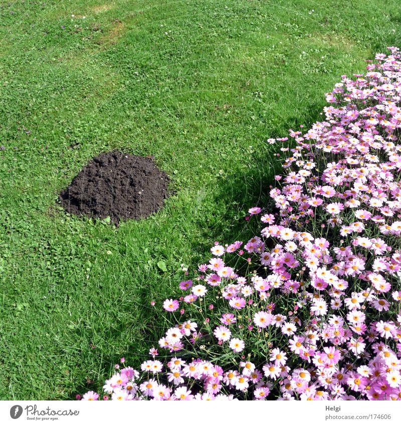 Gärtners Freude... Natur grün schön Pflanze Sommer Blume Umwelt Landschaft Wiese Gras Blüte Park Erde braun rosa natürlich