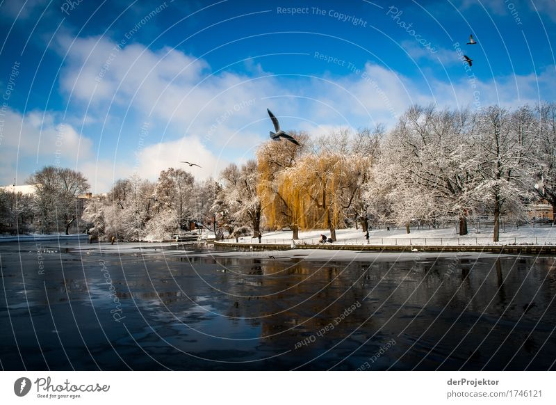 Manchmal ist der Winter schön in Berlin Ferien & Urlaub & Reisen Pflanze Baum Landschaft Tier Freude Umwelt Wiese Schnee Glück Freiheit Tourismus Park wandern