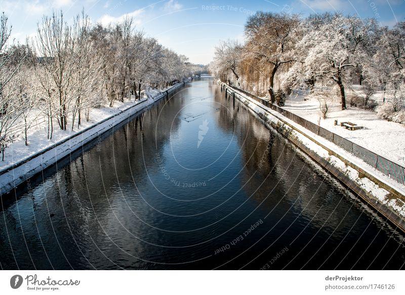 Winter am Landwehrkanal Natur Ferien & Urlaub & Reisen Pflanze Landschaft Erholung Tier ruhig Ferne Umwelt kalt Gefühle Berlin Schnee Freiheit Tourismus