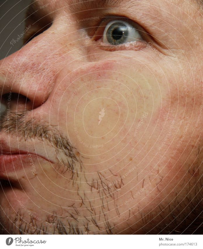fressbrett Gesicht Auge Kopf Haut Mund maskulin Nase Behaarung verrückt Perspektive Bart Langeweile Typ Wange Grimasse Mann