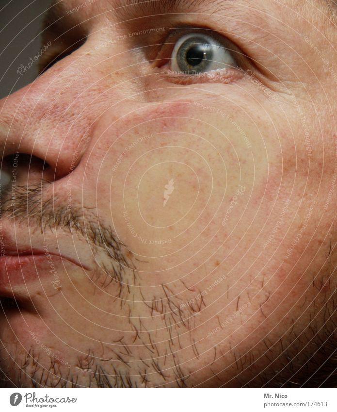 fressbrett Nahaufnahme maskulin Haut Kopf Gesicht Auge Nase Mund Bart Dreitagebart Behaarung hässlich verrückt klappe Typ Grimasse quetschen platt haarstoppel