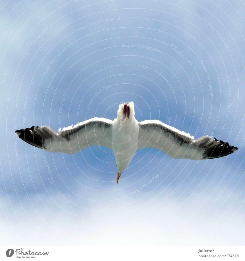 Den Überblick behalten! Farbfoto Außenaufnahme Tag Sonnenlicht Blick nach oben Natur Luft Himmel Sommer Schönes Wetter Tier Flügel Möwe 1 frei Unendlichkeit