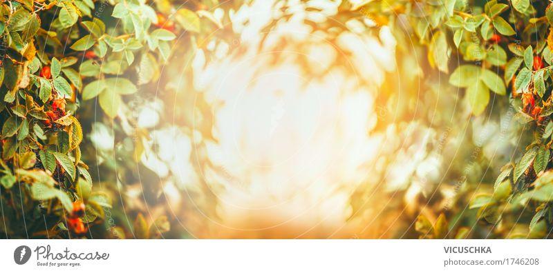 Herbst oder Sommer Natur Hintergrund Lifestyle Freude Garten Landschaft Pflanze Baum Sträucher Blatt Park Fahne rosa Design Sonnenuntergang Sonnenlicht