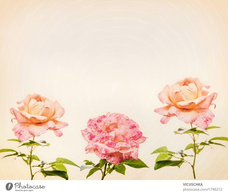 Rosa Rosen, romantische Grußkarte Natur Pflanze Blume Blatt Blüte Stil Feste & Feiern rosa Design Park Romantik weich Frieden Blumenstrauß Sepia