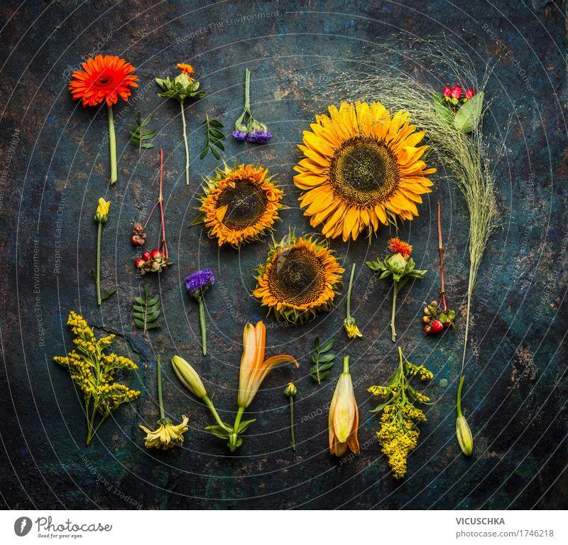 Verschiedene Herbst Pflanzen und Sonnenblumen Lifestyle Stil Design Natur Sommer Blume Sträucher Blatt Blüte Stillleben Flat lay dunkel Farbfoto Studioaufnahme
