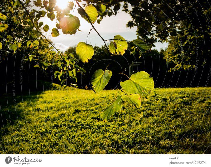 Grüne Lunge Umwelt Natur Landschaft Pflanze Himmel Klima Schönes Wetter Baum Gras Blatt Zweig Park Wiese Bewegung leuchten Idylle Leichtigkeit Laubbaum grün