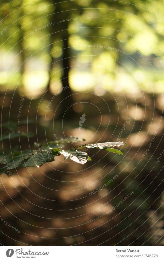 grünlicht Natur Pflanze Sommer Baum Blatt ruhig Wald Umwelt Gefühle braun Stimmung Wachstum Idylle Kreis Glaube