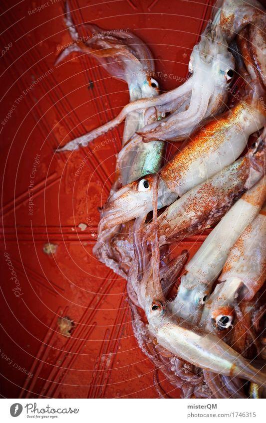 Mittag. Kunst ästhetisch Tintenfisch Meeresfrüchte Fischmarkt frisch Fangquote fangen Fischereiwirtschaft Tentakel Farbfoto mehrfarbig Außenaufnahme Nahaufnahme