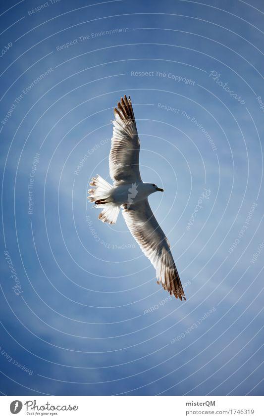 Überflieger. Natur Umwelt fliegen Luft ästhetisch Wind Feder Flügel Möwe Leichtigkeit Blauer Himmel Möwenvögel Möwendreck