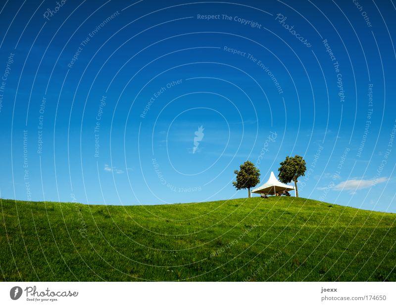 Vorfreude Mensch Software Natur Baum Freude Sommer ruhig Wiese Landschaft Gras Park Hintergrundbild wandern Lifestyle Hügel Veranstaltung