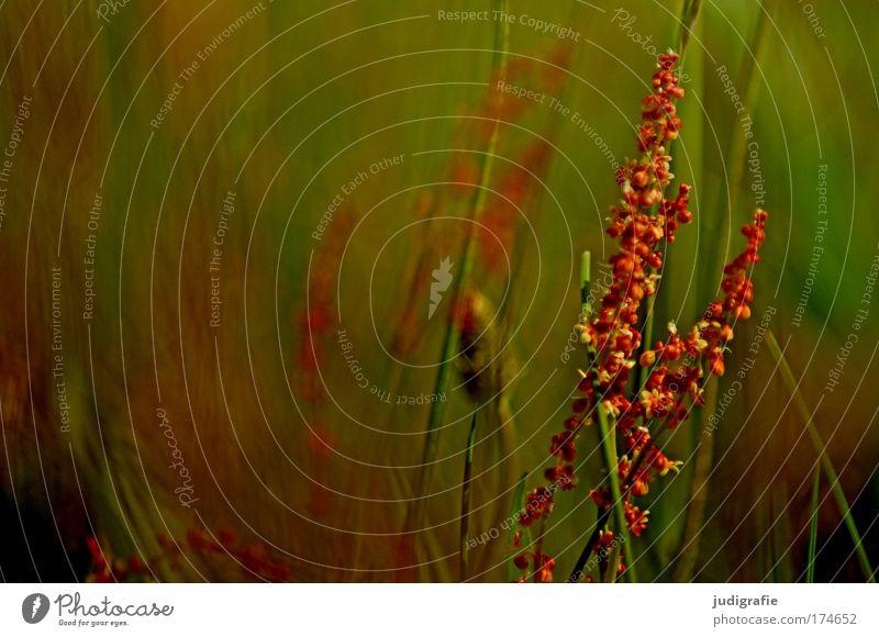 Wiese Natur schön Pflanze Sommer ruhig Leben Erholung Wiese Gras Umwelt Wachstum wild natürlich Idylle Duft Umweltschutz