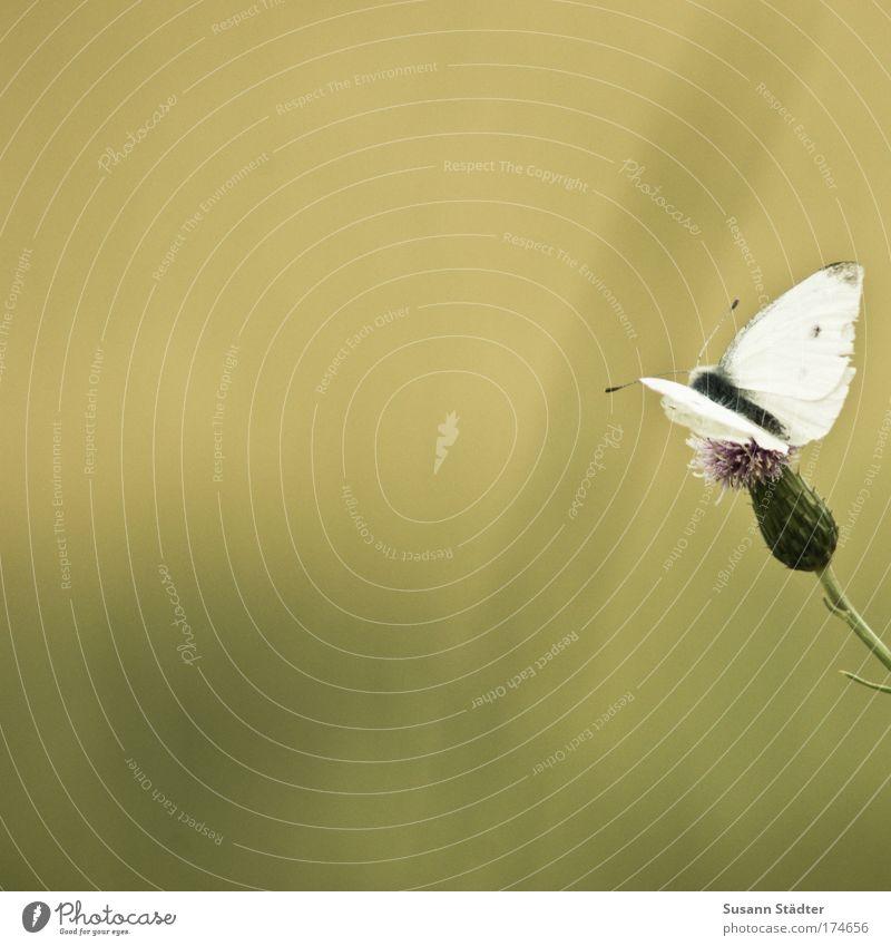 ::200:: Kurze Pause! schön weiß Blume Pflanze Sommer Ferien & Urlaub & Reisen Tier Erholung Wiese Blüte Park Feld warten elegant Ausflug
