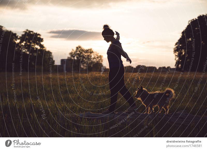 Balancieren. Frau Erwachsene Natur Sonnenaufgang Sonnenuntergang Frühling Sommer Park Wiese Tier Hund gehen elegant Glück Unendlichkeit natürlich Gefühle