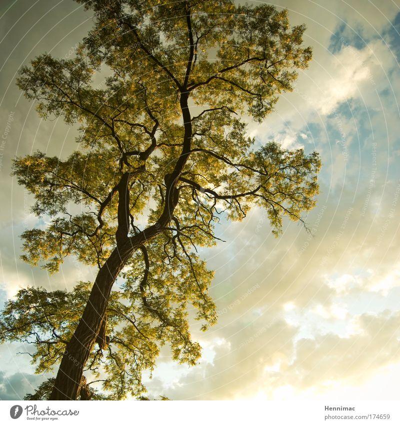 Licht. Luft. Leben. Natur Himmel Baum grün Sommer Blatt Wolken Tier gelb Holz träumen Landschaft braun Gesundheit Umwelt gold