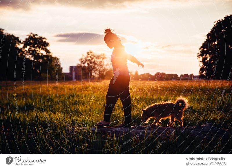 Im Gleichgewicht. Mensch Frau Hund Sommer Erholung Tier ruhig Erwachsene Leben Liebe Bewegung Glück Freiheit Zusammensein Freundschaft Park