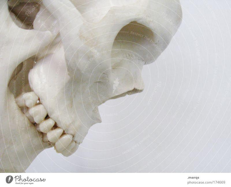 Skull Gedeckte Farben Textfreiraum rechts Profil Blick nach unten Mensch Leben 1 Zeichen authentisch dünn Ausdauer Trauer Tod Angst Entsetzen Todesangst