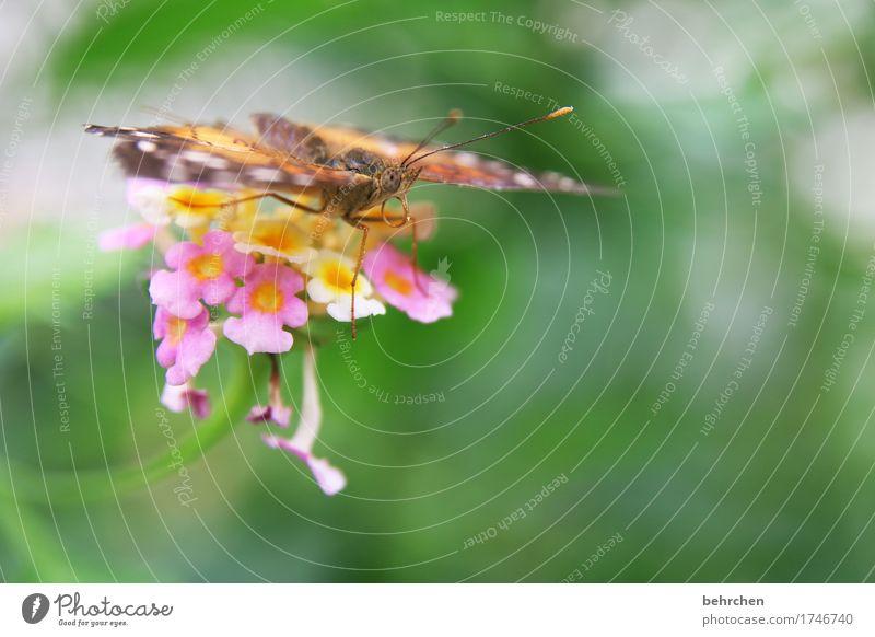 blühender sitzplatz Natur Pflanze Tier Sommer Schönes Wetter Blume Blatt Blüte Garten Park Wiese Wildtier Schmetterling Tiergesicht Flügel 1 beobachten Blühend