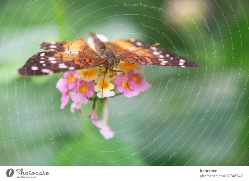 tragflächen Natur Pflanze Sommer schön Blume Erholung Blatt Tier Blüte Wiese Beine klein Garten außergewöhnlich fliegen Park