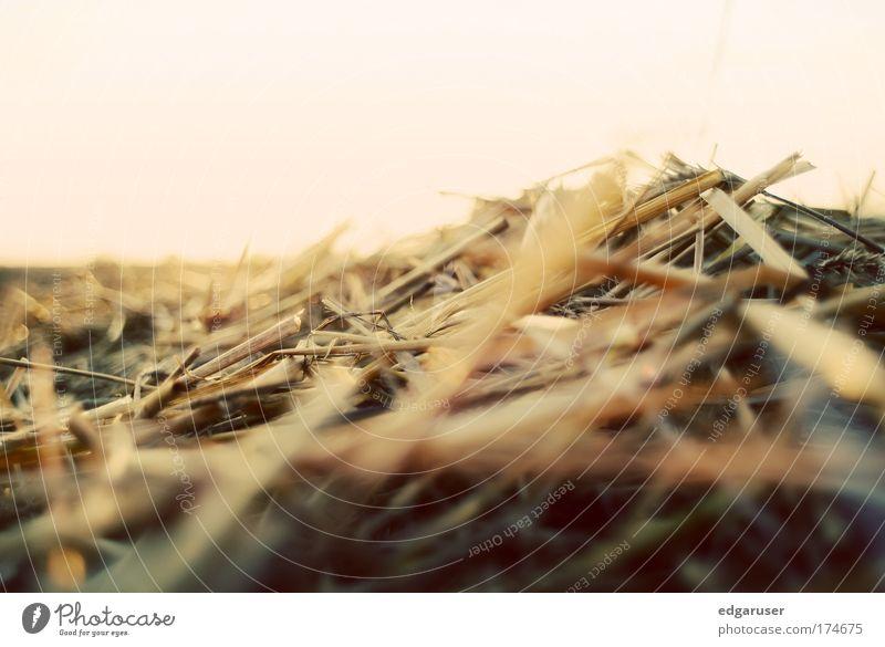 Vergänglichkeit Natur Sonne Pflanze Sommer Tier gelb Herbst Wiese Gras Wärme Feld blond gold nah Ernte trocken