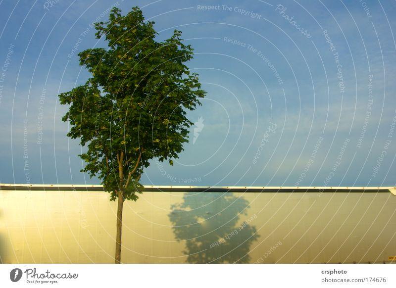 Wenn Bäume mit LKW`s kuscheln... Himmel Baum Blatt Verkehrsmittel Güterverkehr & Logistik Straßenverkehr Lastwagen Metall Zeichen schön blau gold ruhig Farbfoto