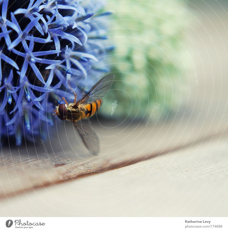 Diamonds for Dickey weiß Blume grün blau Pflanze rot Ernährung Tier Leben Garten Holz Zufriedenheit fliegen ästhetisch Flügel Biene