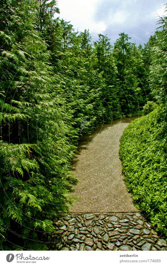 Kurve Natur Himmel Baum Pflanze Sommer Ferien & Urlaub & Reisen Erholung Wiese Gras Garten Wege & Pfade Park Allee Sauerstoff Erholungsgebiet