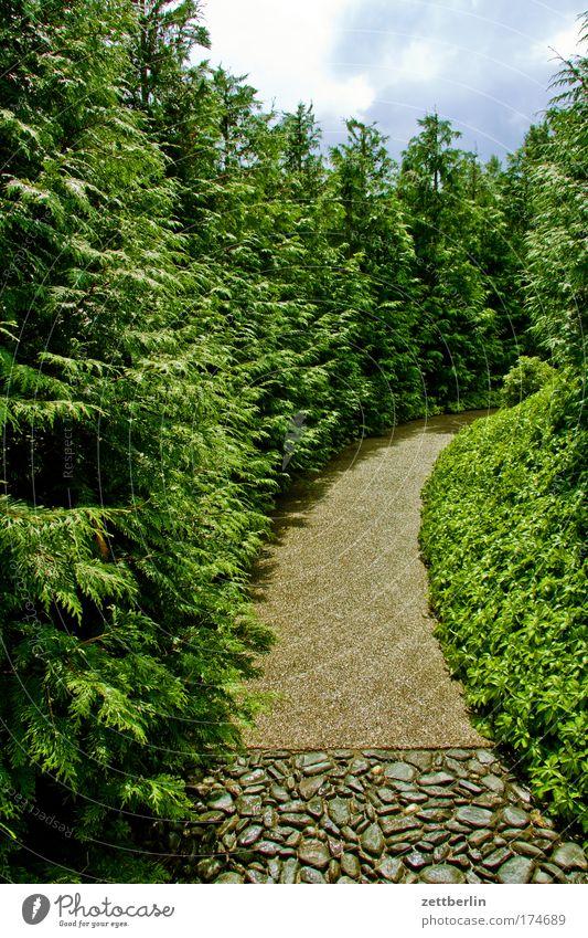 Kurve Natur Himmel Baum Pflanze Sommer Ferien & Urlaub & Reisen Erholung Wiese Gras Garten Wege & Pfade Park Kurve Allee Sauerstoff Erholungsgebiet