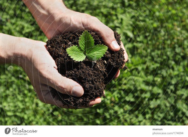 Alle Hände voll .... Natur Hand Pflanze Sommer Ernährung Leben Lebensmittel Frühling Garten Erde Arbeit & Erwerbstätigkeit Frucht Beginn Wachstum Finger Baumschule