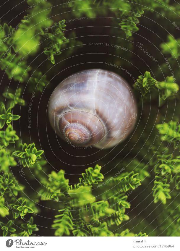 Traumhaus im Grünen Natur Pflanze Tier Sträucher Garten 1 Gefühle Schnecke Schneckenhaus Meinung Perspektive Farbfoto Außenaufnahme Nahaufnahme Detailaufnahme