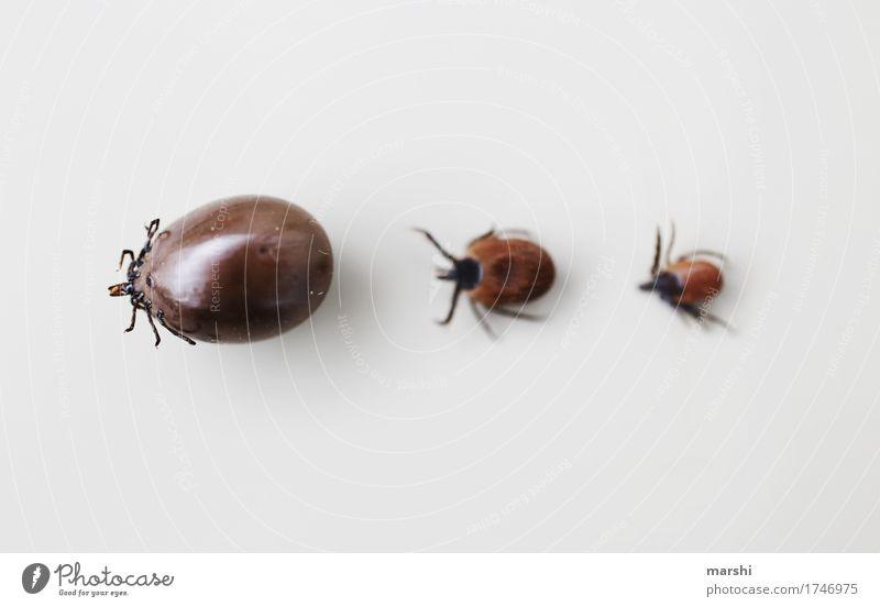 Zeckenparade III Sommer Tier Gefühle klein Garten braun Perspektive gefährlich bedrohlich Risiko Krankheit dick Ekel üppig (Wuchs) aufgeblasen saugen