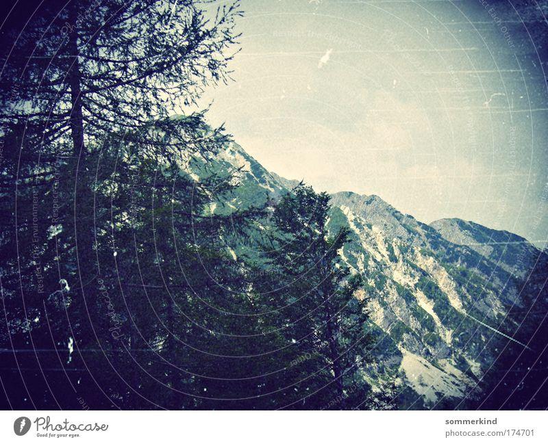 Da oben wohnt die Heidi Himmel Natur Ferien & Urlaub & Reisen alt blau grün weiß Baum Erholung Landschaft schwarz dunkel Umwelt Berge u. Gebirge Gras Schnee