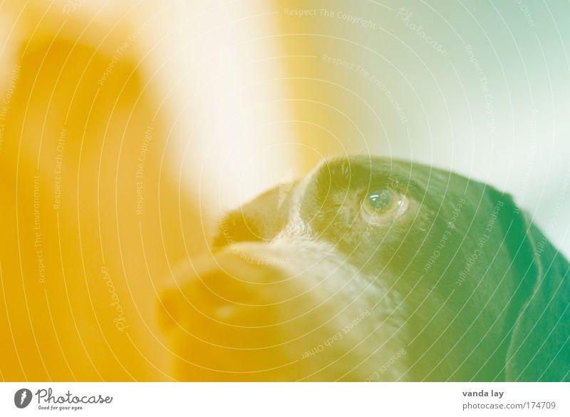 Bekannt wie ein bunter Hund grün Auge Tier gelb Hund orange Kunst Nase verrückt mehrfarbig 1 Kreativität skurril Haustier trendy Fototechnik