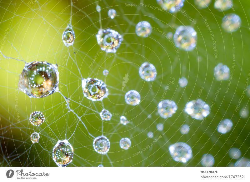 Regentropfen Wassertropfen Tropfen Netz Spinnennetz faden fäden Tau nass blau Kugel Natur natürlich Makroaufnahme Detailaufnahme Nahaufnahme grün