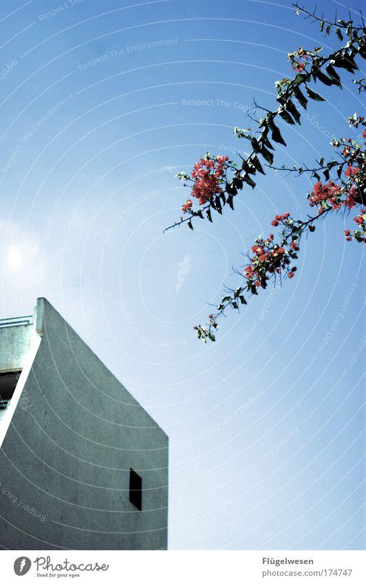Das Hotel sieht aber nicht aus wie im Prospekt ;-( Himmel Pflanze Ferien & Urlaub & Reisen Erholung Traurigkeit Freizeit & Hobby Beton Tourismus Lifestyle