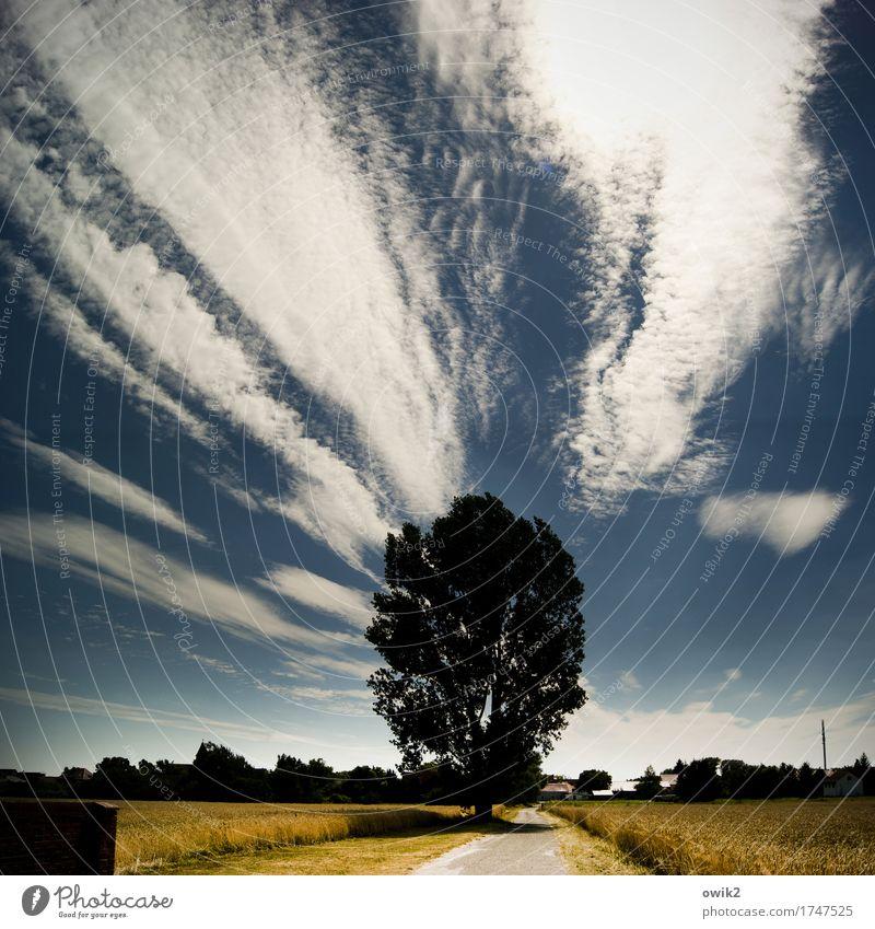 Am Friedhof Himmel Natur Sommer Baum Landschaft Einsamkeit Wolken Haus Ferne Umwelt Wege & Pfade Deutschland hell Horizont Feld Idylle