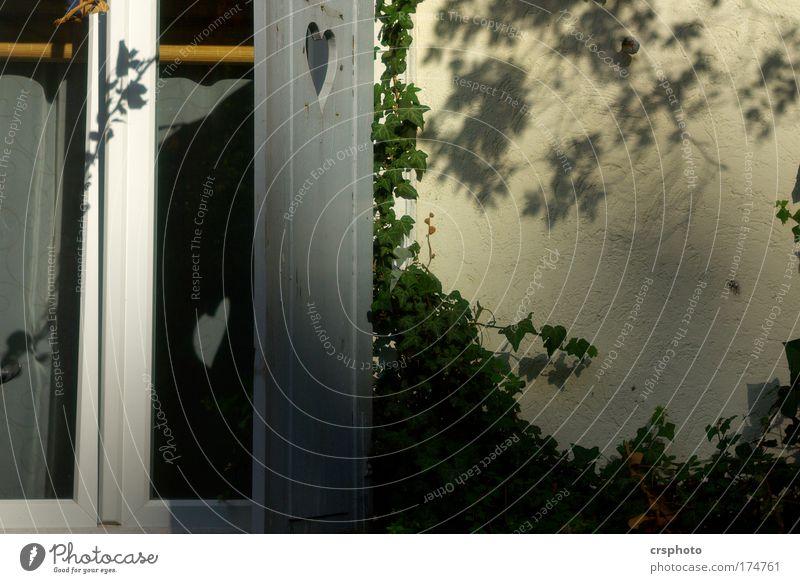 """""""Hab doch ein Herz...!"""" Pflanze Tier Einsamkeit Haus Liebe Fenster Wand Gefühle Wärme Mauer Traurigkeit Raum Wohnung Fassade Design"""
